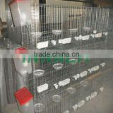 Poultry Equipment HIGH QUALITY PIGEON CAGE (FACTORY)