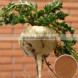 Natural Maca Root Extract /Lepidium meyenii extract with Macamides