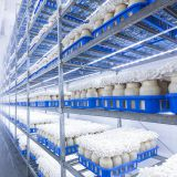 Fresh-Keeping cold Storage