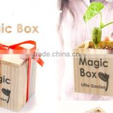 wholesale magic message bean seeds with words in stock