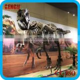 Museum High Quality Artificial Fiberglass Or Plastic Dinosaur Skeleton