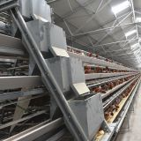 Selling poultry layer chicken cage for poultry farm