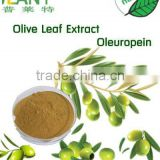 Free Sample olive Leaf Extract oleuropein reduce high blood pressure and inhibition of oxidation of cholesterol