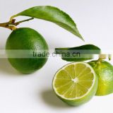 HIGH QUALITY FRESH GREEN LIME FROM VIETNAM