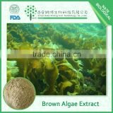 100% Pure Brown Seaweed Extract Fucoxanthin and Fucoidan Powder