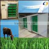 Automatic hydroponic barley fodder seeds germinator system for poultry,Cattle Sheep Horse Animal Livestock