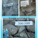 FROZEN BLACK POMFRET/WHITE POMFRET FISH WHOLE ROUND IQF