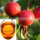 manufacturer wholesale Organic Rosehip essential oil press machine bulk price