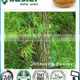 High Quality White willow Bark Extract Powder,5%-98% salicin HPLC
