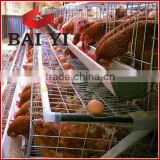 A Type and H Types of Poultry Cage System For Layers, Broilers, Day Old (Nigeria & Kenya Agent)