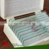 Chick 56 hr, w.m. Microscope Slide in Chick embryology Individual microscope prepared slide