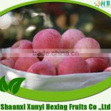chinese red fuji apple, apples, health apple