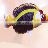 Hot selling children's toy/Auto inflatable balloon/fish shape
