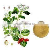 Manufacturer Supply Hawthorn Berry Leaf Extract