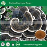 Natural Turkey tail extract, Coriolus versicolor mushroom,Coriolus versicolor mycelium extract                                                                         Quality Choice