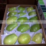 Fresh Guava for exporting Best- selling