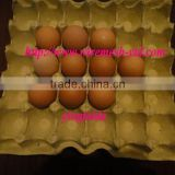 chicken cage egg tray on hot sale