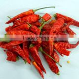 Dried red Hot Chili Pepper