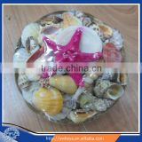 Sea shell decoration Shellpack with Starfish 15cm