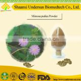 mimosa hostilis root bark extract powder