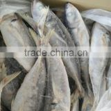 2016 Newly catch high quality Frozen fish red tail horse mackerel 25cm up
