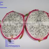 100% Natural Fresh Dragon Fruit from Vietnam-Ms Ha 84974258938