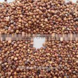 New Crop Red Sorghum Market Price