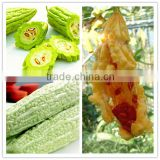 100% Pure Natural Organic High Quality with Best Price 10% Charantin Bitter Melon Seed Extract