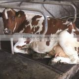 Dairy Cattle Bedding cow mat