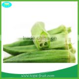 2015 Green Fresh Okra Vegetable
