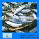 Fresh wholesale frozen sardine