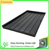 ebb and flow tray fodder system hydroponic