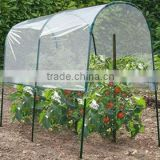 medium size garden tomato green house