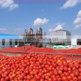 2014 Products New Gino Tomato Paste