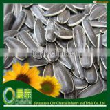 Inner Mongolia Big Size Chinese Black Sunflower Seeds Ton Price