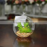 Wholesale Geometric Glass Terrarium Mini Succulent Plant