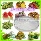 natural brassinolide powder