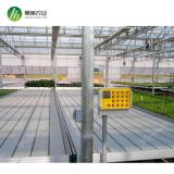 Greenhouse garden ebb and flow ebb flow rolling benches with food garde ABS