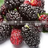 Whole sale High quality organic dried Mulberry Fruit Extract powder for beverage&cosmetics natural fruit extracts