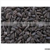 High Quality Black sunflower seeds for oil production, SUNFLOWER SEEDS