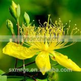 2016 New Product St Johns Wort Extract Hypericin