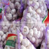 Hot selling garlic drying machine High Quality garlic essence ginger & garlic peeler machine