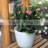 Good quality branded glass flower vase for home and garden decoration