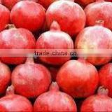 2014 High Quality pomegranate extract Ellagic Acid and Punicalagins-pomegranate juice bulk