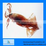 best quality new frozen squid dried squid