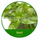 High Yield OP Basil VGB03/ Vegetable Seeds