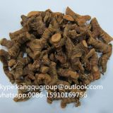 Best quality galangal