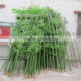 SJLJ013573 artificial evergreen plant and tree fake plastic bamboo stick