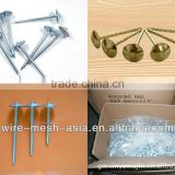 good quality THREE STAR blue shoe tack nails factory