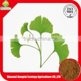 Chinese Natural Herb/Ginkgo Biloba Extract Powder Solvent Extraction Plant Extract with High Quality